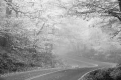 En la niebla Imagen de archivo libre de regalías
