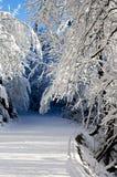 En la nieve fotografía de archivo libre de regalías