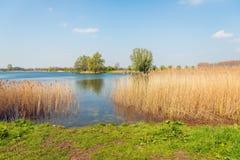 En la orilla de un lago foto de archivo libre de regalías
