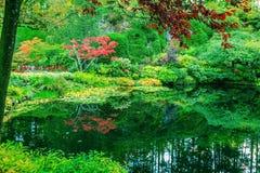En la pequeña charca árboles reflejados Fotografía de archivo