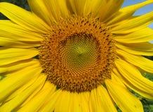 En la plena floración en julio imagen de archivo