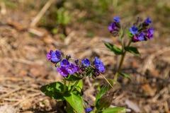 En la primavera, una nueva vida comienza en naturaleza, los brotes se abren y la floración de las flores imagenes de archivo