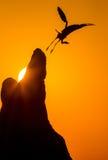 En la puesta del sol Imagen de archivo libre de regalías