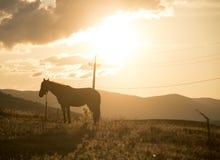 En la puesta del sol Fotografía de archivo libre de regalías