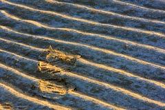 En la puesta del sol, las huellas en la playa son muy hermosas en el sol Fotografía de archivo
