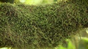 En la rama de un árbol de mandarín un musgo verde hermoso, contra un fondo de rayos de un sol caliente metrajes