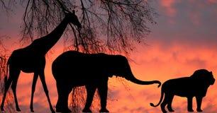 En la selva Imagen de archivo libre de regalías