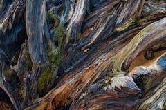 En la sombra de raíces del árbol imágenes de archivo libres de regalías