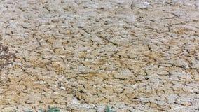 En la superficie del fango crece un arbusto seco almacen de metraje de vídeo