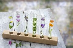 En la tabla, las flores y las plantas de madera grises viejas en tubos de ensayo en ayuda de madera en un fondo blury, Foto de archivo libre de regalías