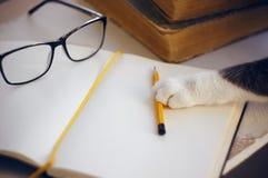 En la tabla son los vidrios, un lápiz y un cuaderno, gato alcanza para un lápiz con su pata fotos de archivo libres de regalías