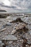 En la trayectoria Cornualles Inglaterra Reino Unido de la costa Fotografía de archivo libre de regalías