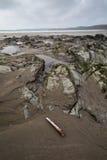 En la trayectoria Cornualles Inglaterra Reino Unido de la costa Imagen de archivo