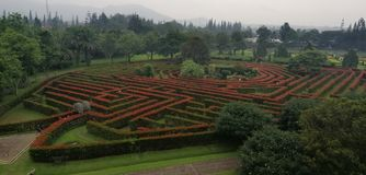 En labyrint av träd royaltyfri fotografi