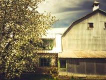 En ladugård i vår Arkivbilder