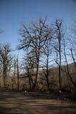 En lake i ett fridsamt trä Den livliga morgonen i färgrik skog med solen rays till och med träd Guld- lövverk och vandringsled i  royaltyfria bilder