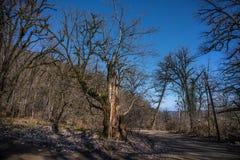En lake i ett fridsamt trä Den livliga morgonen i färgrik skog med solen rays till och med träd Guld- lövverk och vandringsled i  fotografering för bildbyråer