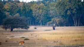 En landskaplandskapklick av prickiga hjortar och elefanten royaltyfri foto