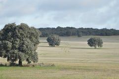 En landsväg mellan träden Arkivfoto