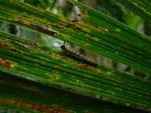 en larvmatning Royaltyfri Foto