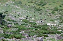 En las colinas del monte Elbrus imagen de archivo libre de regalías