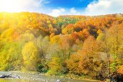 En las cuestas del bosque de las montañas y del río amarillos de la montaña fotografía de archivo libre de regalías