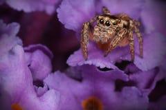 En las flores púrpuras Fotos de archivo