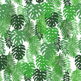 En las hojas tropicales de un fondo blanco imagen de archivo