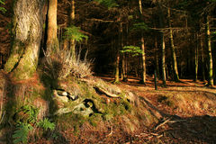 En las maderas Fotografía de archivo libre de regalías