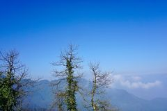 En las montañas debajo del cielo azul, algunos árboles muertos rodean la vid verde fotografía de archivo