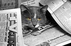 En las noticias Imagen de archivo libre de regalías