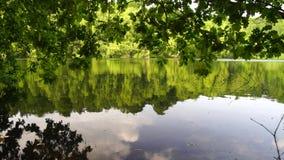 En las orillas del lago Moyland, mirando a través de los robles a la otra orilla metrajes