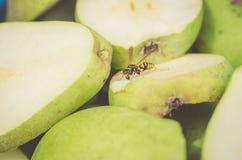 En las peras maduras la avispa sits/on las peras cortadas maduras que la avispa se sienta, foco selectivo fotos de archivo libres de regalías
