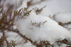 En las ramas de la nieve Foto de archivo libre de regalías