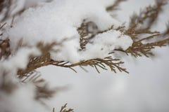 En las ramas de la nieve Imagen de archivo libre de regalías
