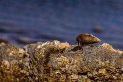 En las rocas Imagenes de archivo