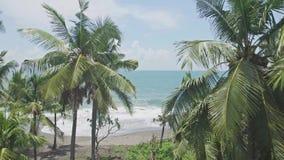 En las zonas tropicales 4k aéreo de las palmeras del océano
