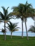 En las zonas tropicales: Palmas Fotos de archivo libres de regalías