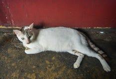 En lat katt som ligger på vägen arkivfoto