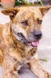 En le hund Fotografering för Bildbyråer