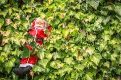 En le Santa Claus som stiger ned i mitt av växterna Arkivfoton