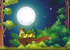 En le sköldpadda ovanför vagga i mitt av skogen Arkivfoton