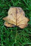 En leaf& x27; s-liv Fotografering för Bildbyråer