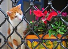 En ledsen katt Royaltyfria Foton