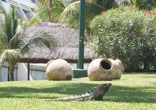 En leguan på den tropiska semesterorten Royaltyfria Bilder