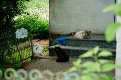 En liga av färgrika katter fotografering för bildbyråer