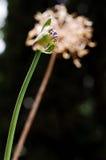 Blomma VS Dead fotografering för bildbyråer
