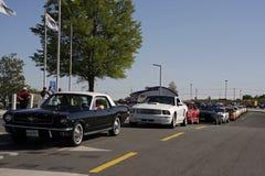 En linje av mustang på Charlotte Motor Speedway Royaltyfri Foto