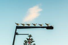 En linje av seagullen Royaltyfri Bild