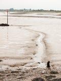 En linje i gyttjan på strandfloden Royaltyfri Bild